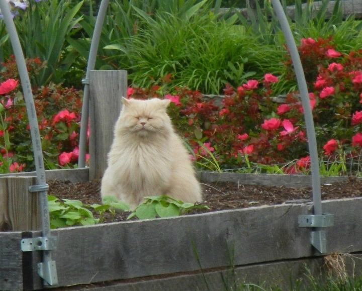 14 кото-растений, которые расцветают к весне