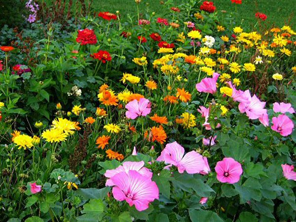 FLOWER GARDEN WATERING - Beautiful Flowers