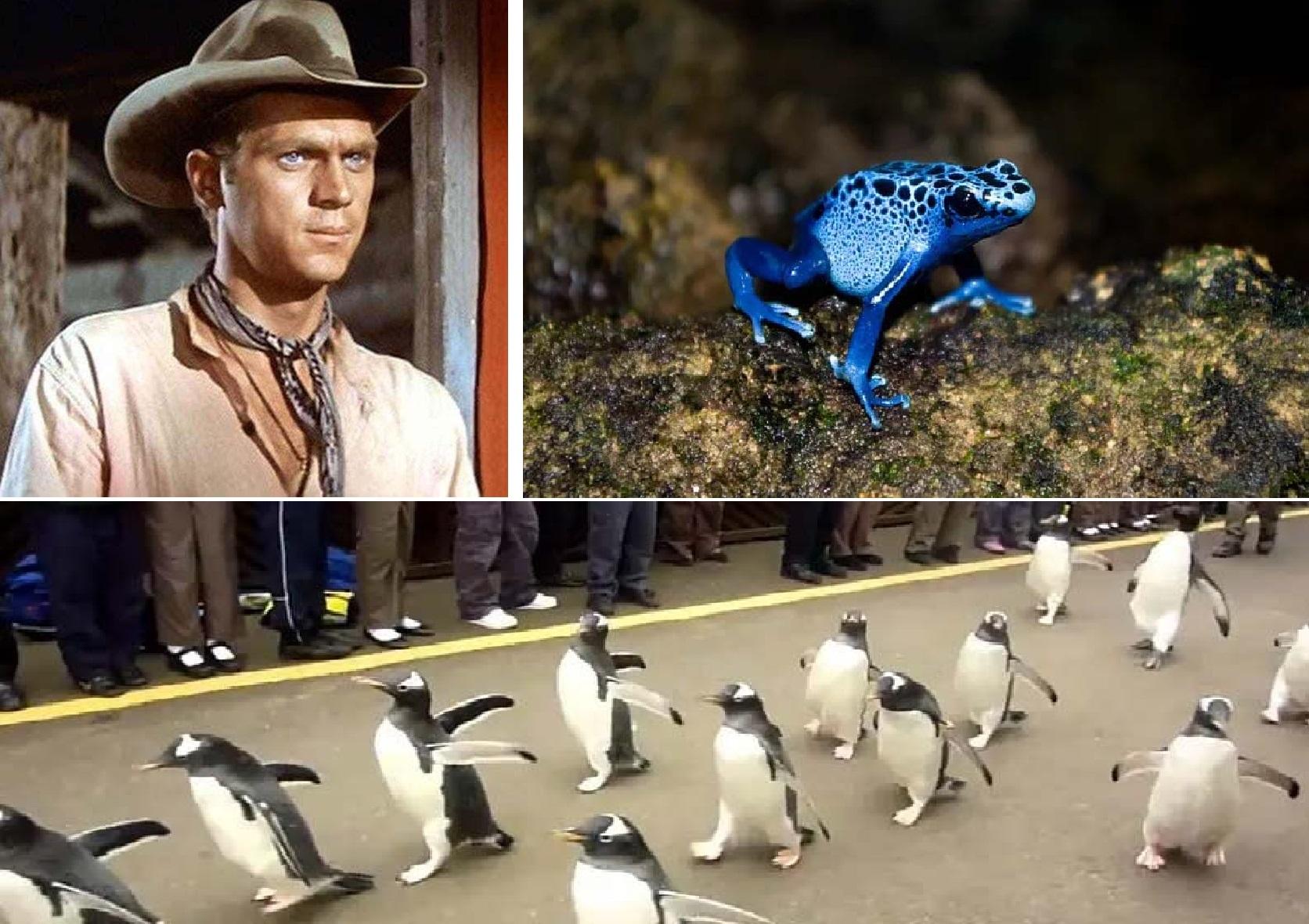 10 интересных фактов: от парада пингвинов, смещения континентов и заканчивая русской рулеткой
