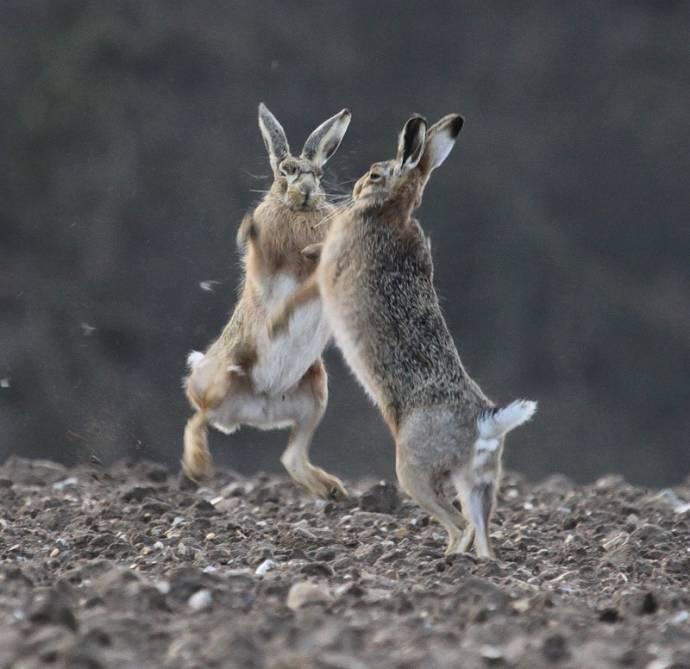 Правда про зайцев
