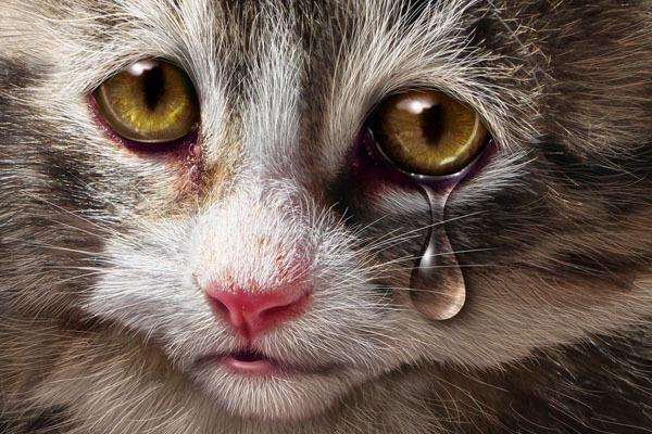 Кошки людям не игрушки или меньшее из двух зол