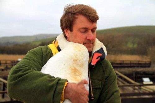Лебедь обнял за шею спасшего…