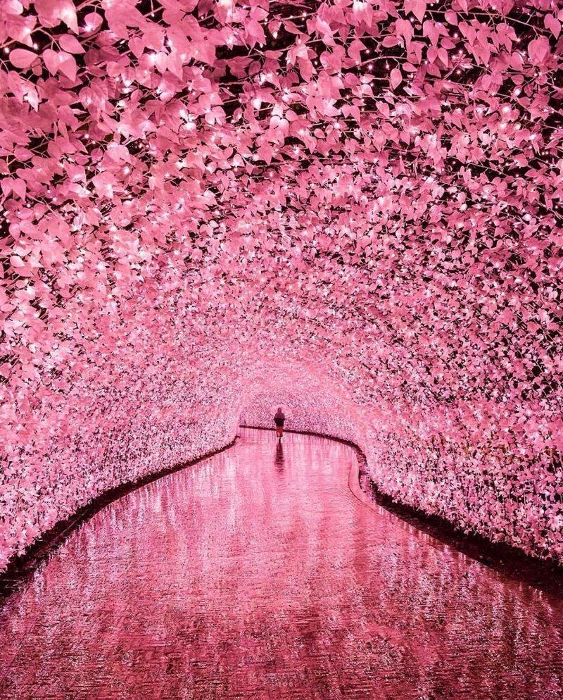 Mie, Japan красивые места, мир, планета, природа, путешествия