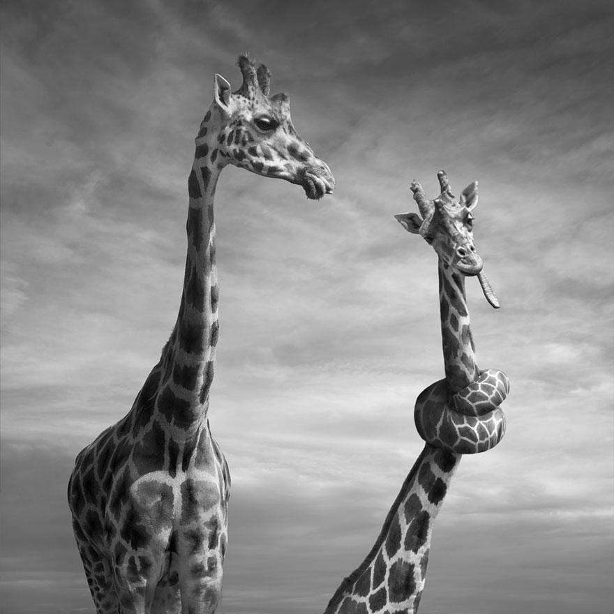 Необыкновенные фото манипуляции польского фотографа Дариуша Klimczak