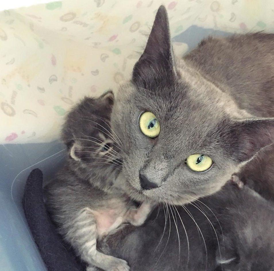 «Я вам не верю!» Кошка с котятами боялась людей, но её опекунша придумала, как всё изменить