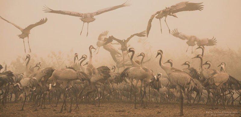 А здесь - будто кусочек самой Африки. Перелетные журавли осенью в Долине Хула, перед перелетом в Африку. Израиль, красиво, красивые места, природа, страны, страны мира, фото, фотограф