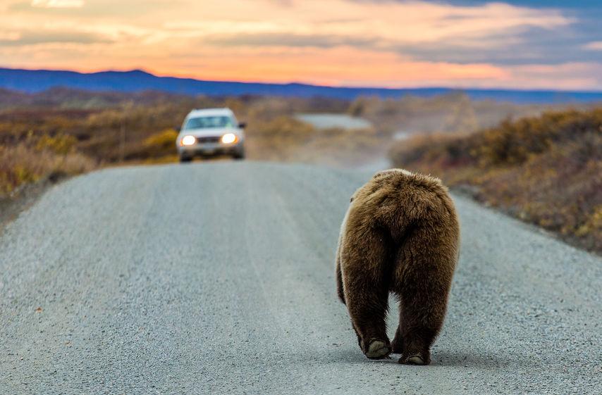 Самый дисциплинированный медведь