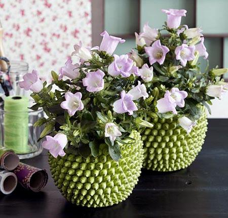 Плохие цветы для дома