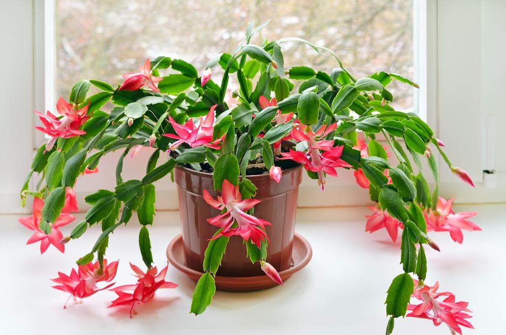 Почему болеют комнатные растения - 10 распространенных причин