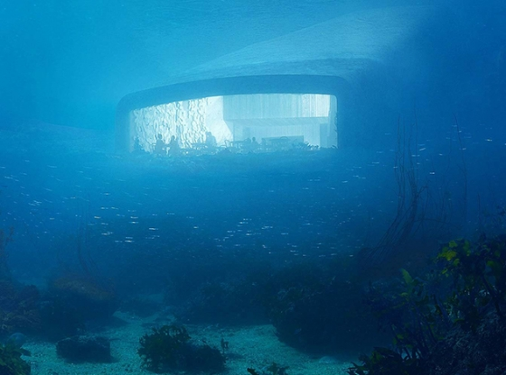 Отдых под водой: 4 подводных отеля для любителей подводной фауны