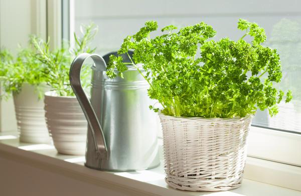 Создаем кухонный сад. Секрет…