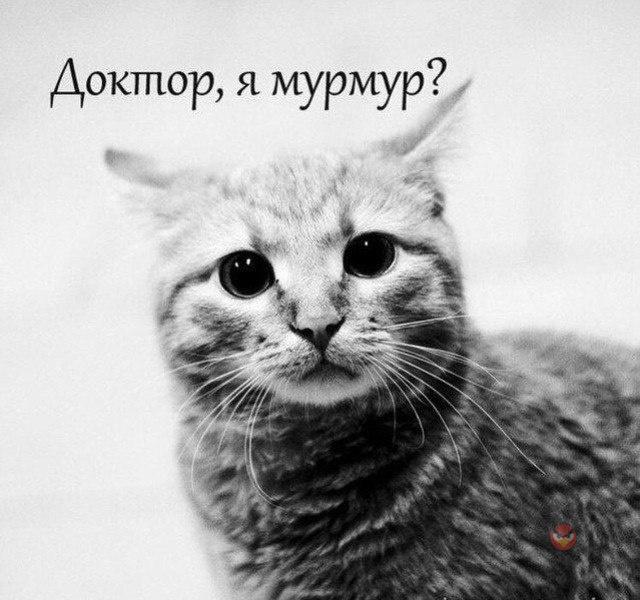"""""""Бред сивой кАбылы !""""......д…"""
