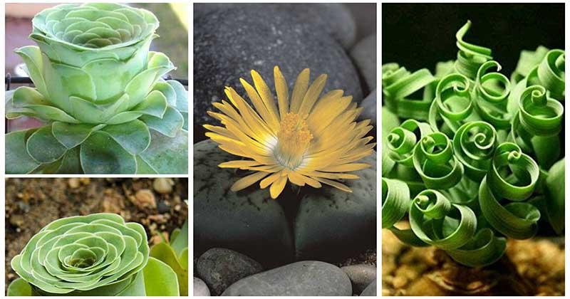 18 самых поразительных растений, о которых вы раньше никогда не слышали