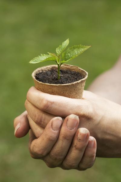 Заговоры для сада и огорода. Всё для урожая и его для защиты.