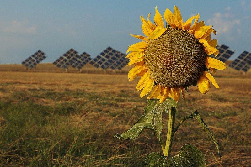 Энергия Солнца: где находятся и как работают самые экологичные электростанции планеты