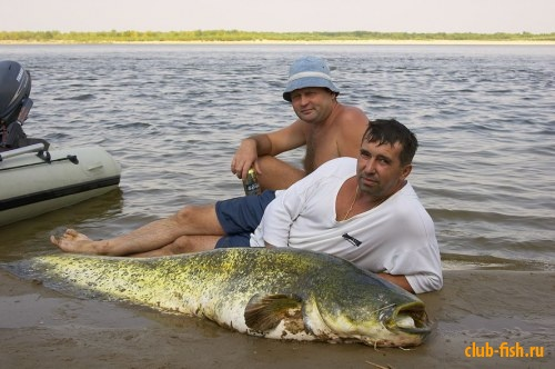 реки кубани в которых ловят рыбу