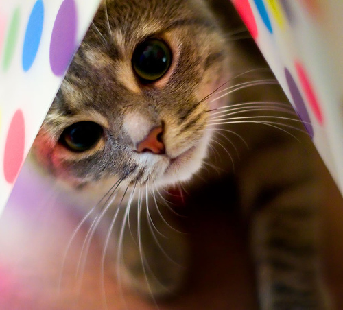 Фото на аву в вк кошек