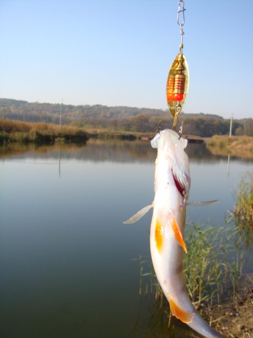 рыбалка в полтаве на ворскле видео