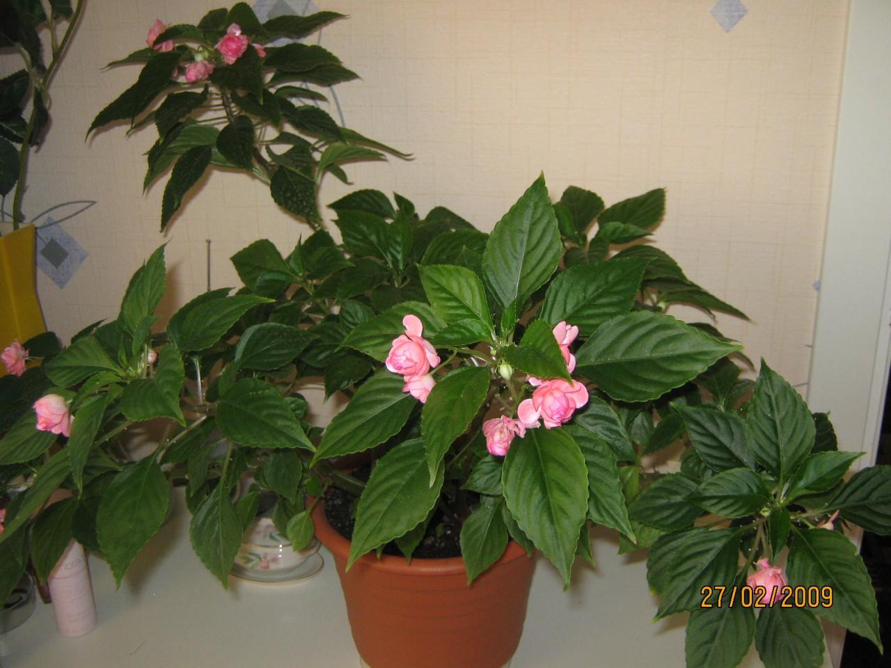Комнатные цветы с названием и уход за ними фото что это за болезнь