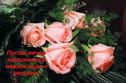 Красивые цветы добрый вечер