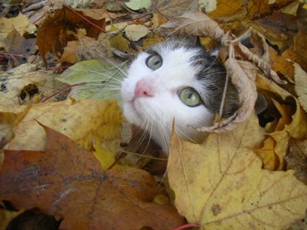 Осени постель