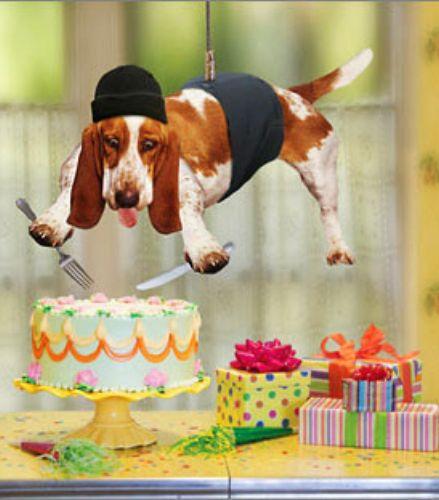 Фото прикольных поздравлений с днем рождения