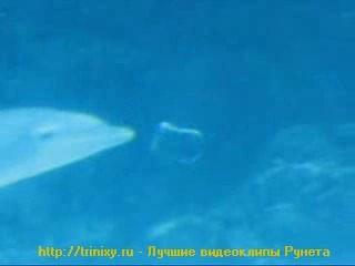 Дельфин и кольца
