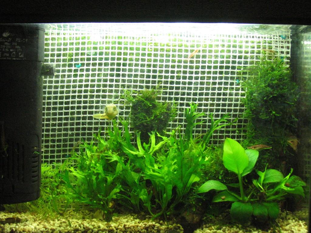 Выращивание мхов аквариумных 82