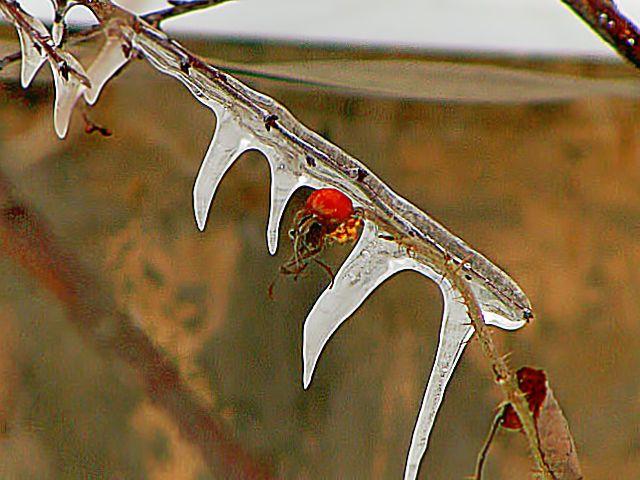 жизнь среди льда