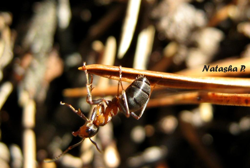 муравьишка-акробат)))