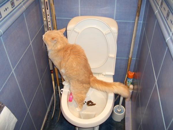 Почему кричит кот когда ходит в туалет