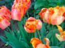 Весенние краски