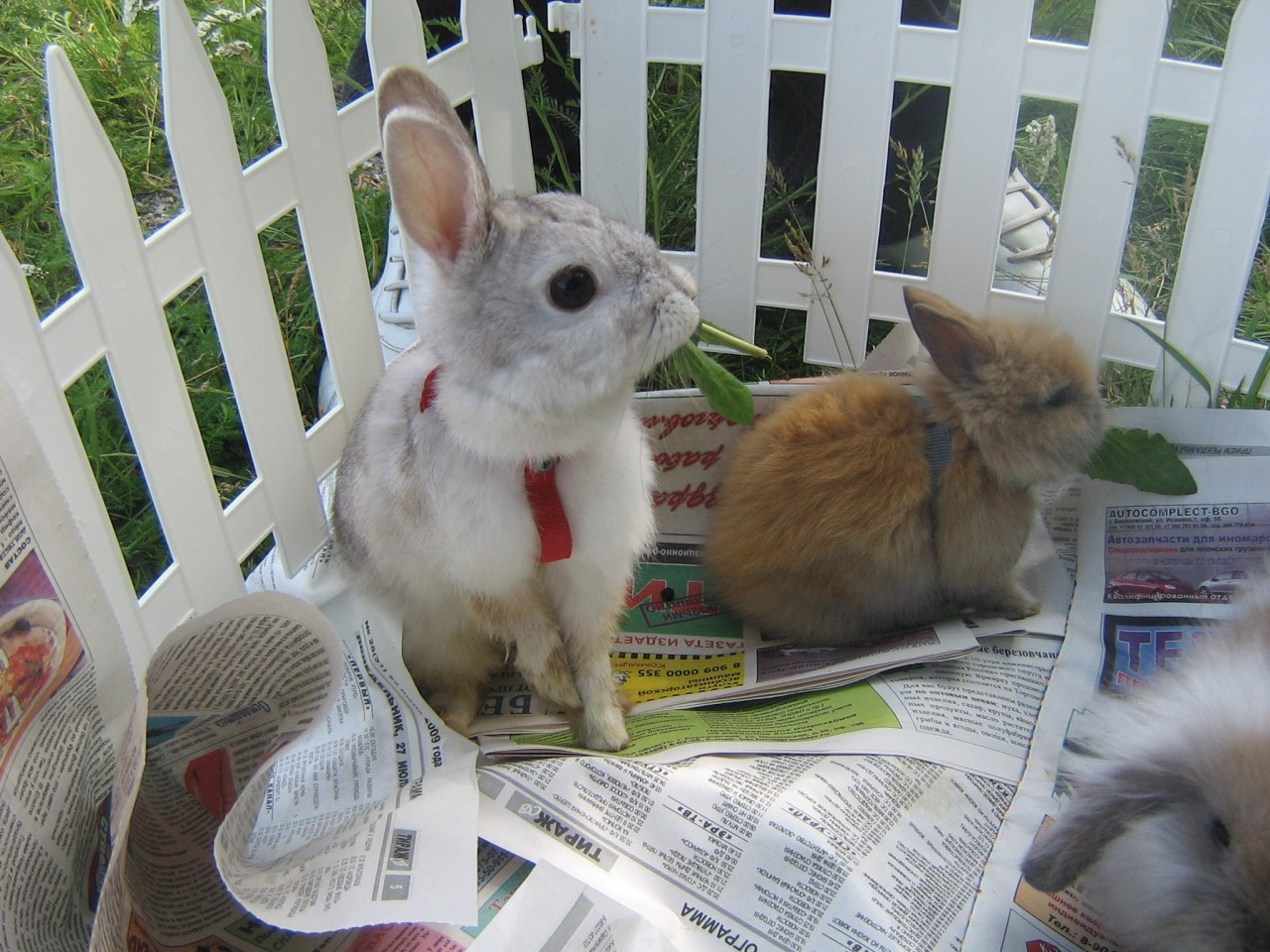 Как сделать клетку для кроликов своими руками - чертежи 49