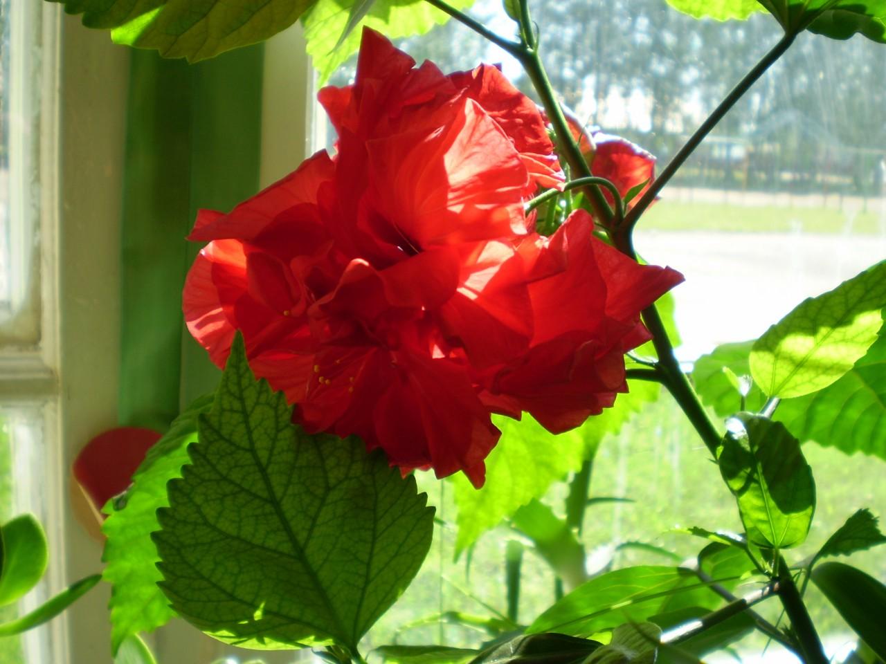 Однолетние цветы для альпийской горки фото названия