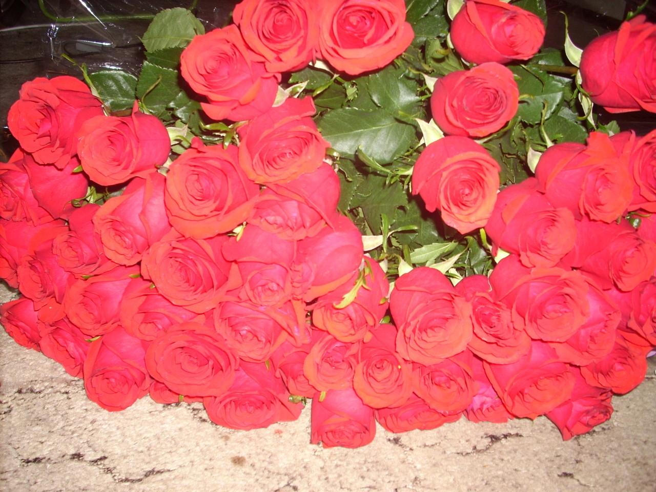 Розы сорт татьяна