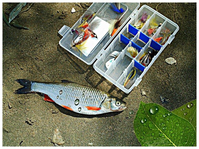 ловля рыбы на колбасу