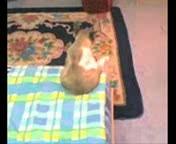 У кота депресняк