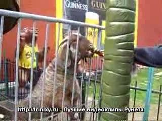 Животные и алкоголь - 3