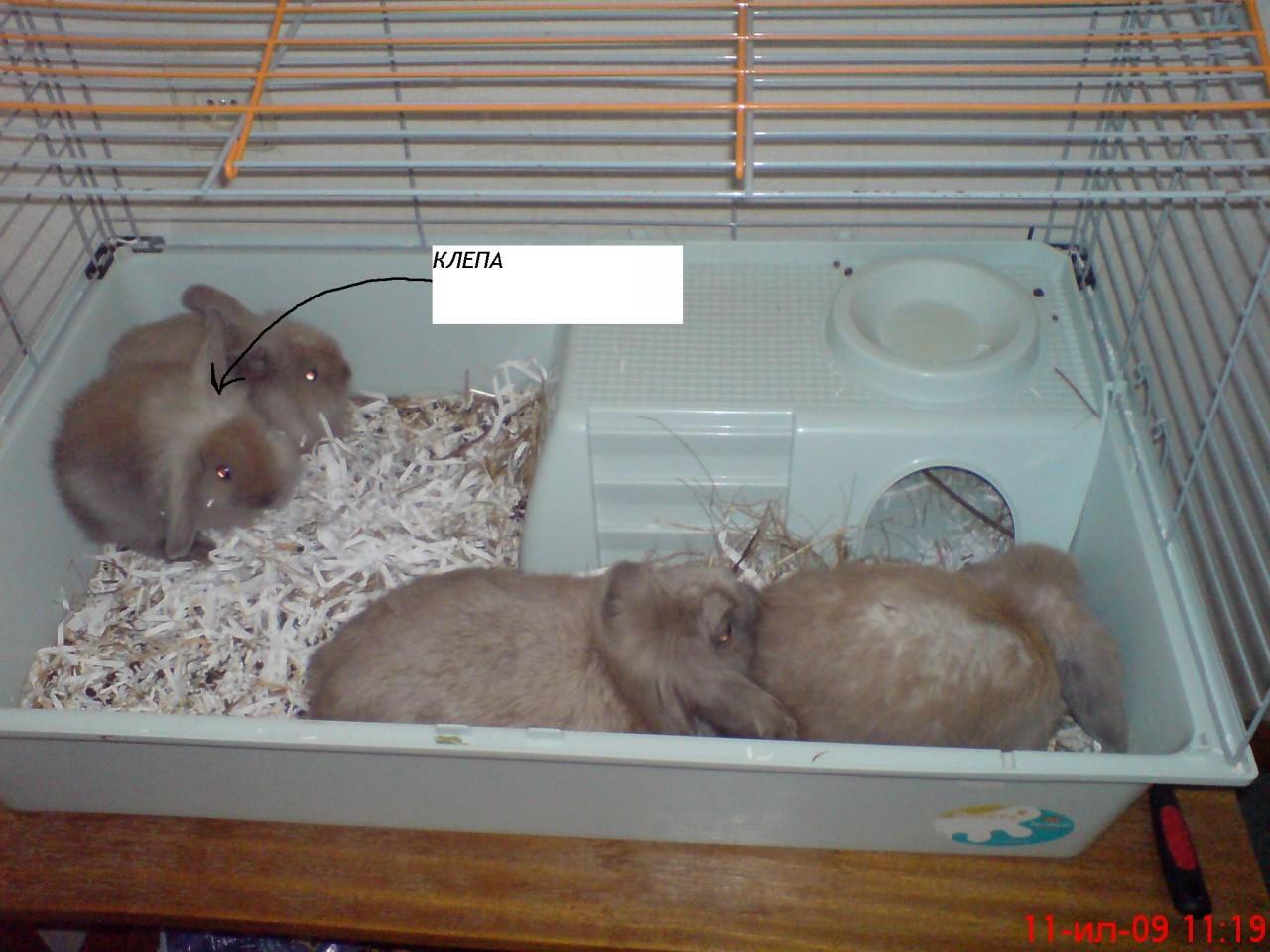 Искусственное кормление новорождённых крольчат. Кролики 36