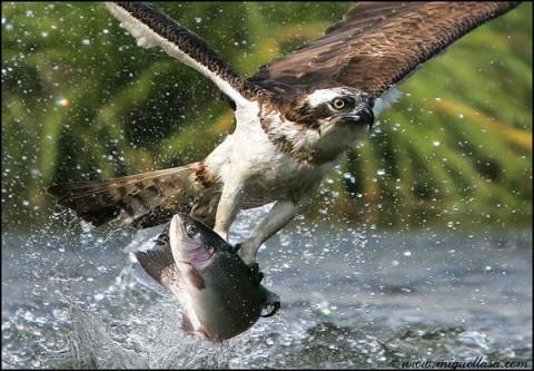 вот это рыбак !!!!!!