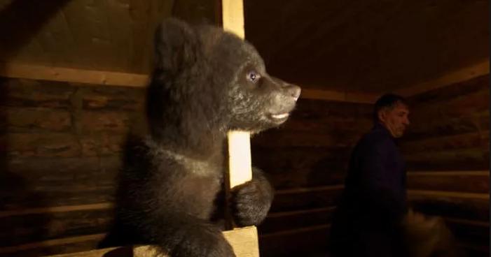 Биолог организовал приют для медвежат-сирот