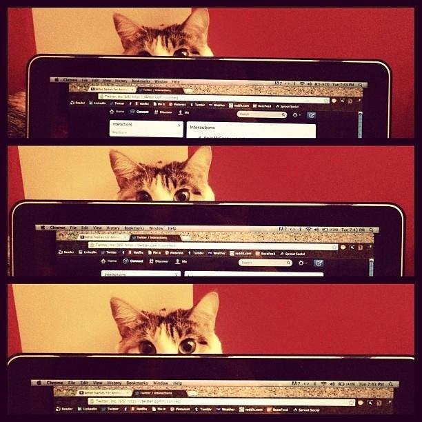 Кот вас любит, скучает, милые, смешные