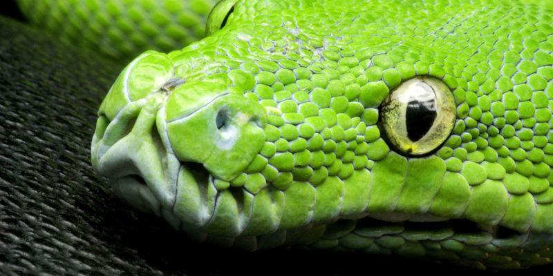 Самые опасные змеи Африки