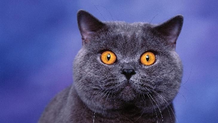 Наш кот оказался не в силах оценить любовный порыв соседской кошечки