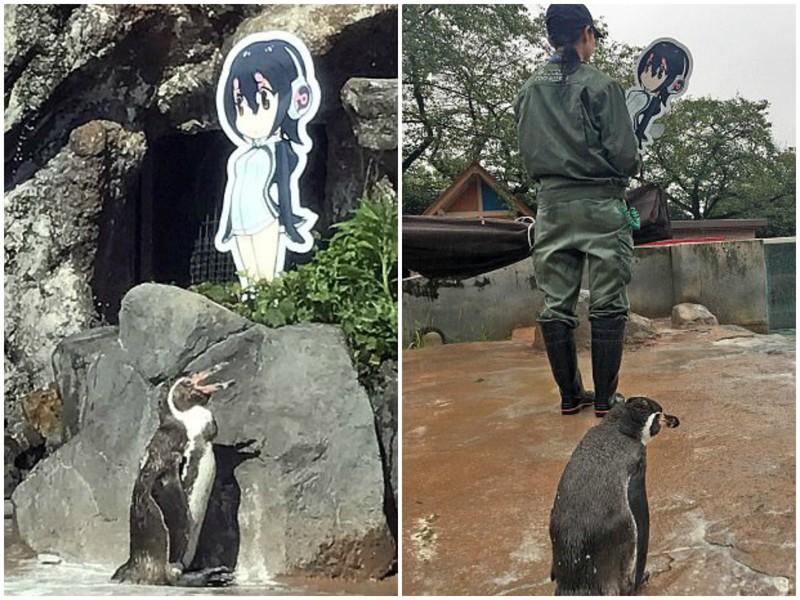 Пингвин впал в депрессию после того, как у него отобрали картонную возлюбленную