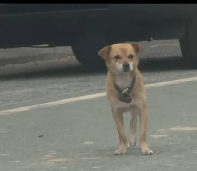 Хромой пес ждал хозяина у сг…