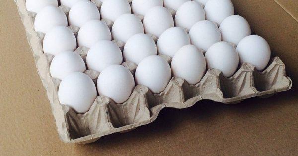 Самый обычный бумажный лоток от яиц превращается… Идея обалденная!