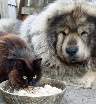 Как кот купил себе защитника. Вот же хитрющая тварь, как только додумался?!