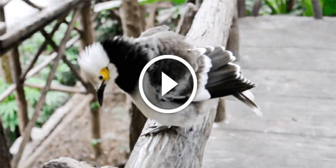 Птичка подлетала к людям, внимательно осматривала и параллельно что-то «говоря» на своем...