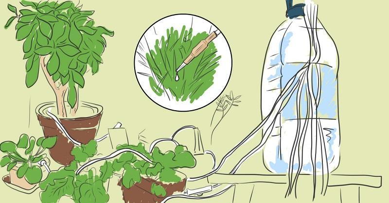 Растения будут поливать себя сами! Автоматическая система, продуманная до мелочей
